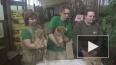 В Ленинградском зоопарке впервые показали новорожденных ...