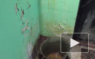 Ужасные условия жилья в поселке Лебяжье: ВИДЕО