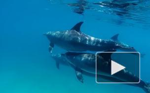 В США увидели в Сирии крымских дельфинов-разведчиков