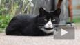 Видео: на улице Резервной появится новая зона отдыха