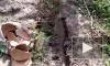 В Индии потерявшие ребенка супруги спасли чужую заживо похороненную девочку