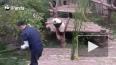 Работа мечты: Сотрудника Московского зоопарка направили ...