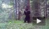 """Уральский медведь """"станцевал"""" у дерева и попал в видеоловушку"""