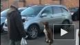 Собака-акробат стала хитом Youtube, несмотря на то, ...