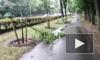 От ночного загула дебоширов в Красном Селе пострадали деревья