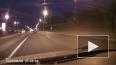 На Московском шоссе лось чуть не спровоцировал ДТП