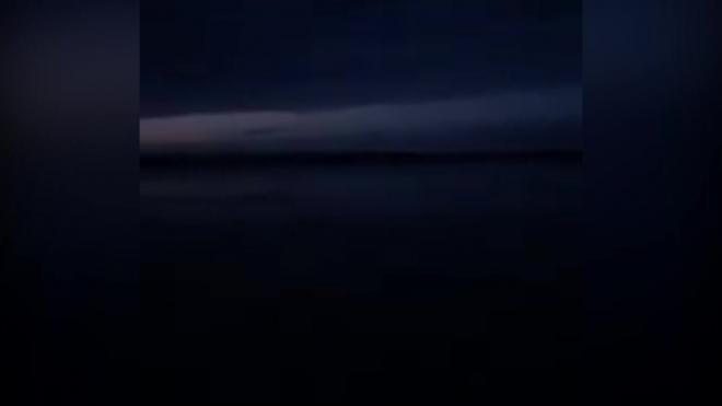 В Финском заливе в прошлом году сняли на видео дельфинов
