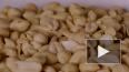 Ученые обнаружили в кишечнике спусковой механизм аллерги...