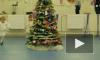Петербургский застройщик организовал елку для малышей из Донбасса