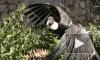Хищные птицы ленинградского зоопарка отказались от свободы