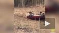 В перевернувшейся под Пикалево легковушке погиб водитель