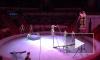 В Гатчине юная циркачка чудом выжила после падения с высоты