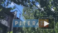 В Колпино ветка тополя повисла над детской площадкой