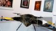 Зоозащитники Петербурга - против летающего чучела кота