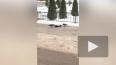 Вороны напали на собрата возле здания МВД на Ильюшина