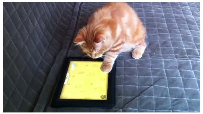 Кот-виртуал