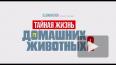 """Вышел новый трейлер мультфильма """"Тайная жизнь домашних ..."""
