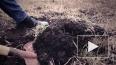 Петербурженку расчленили, останки закопали в огороде