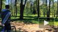 В Шуваловском парке велосипедист сбил насмерть трехлетнего ...