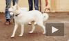 Собак-потеряшек из приюта отдают на расправу догхантерам
