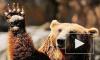 Медведи-людоеды осаждают хабаровское село: люди боятся выходить на улицу