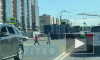 Мусоровоз въехал в рейсовый автобус с пассажирами на пересечении Будапештской и Ярослава Гашека