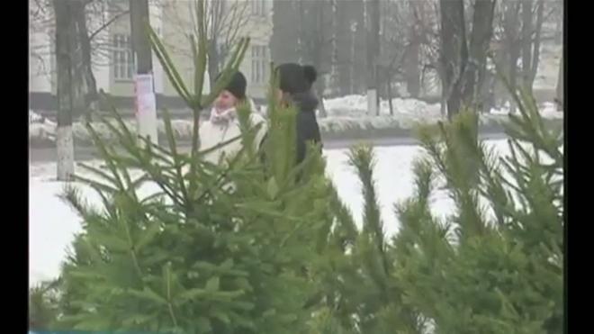 За  елкой на плантацию. Депутаты придумали правила вырубки  новогодних деревьев