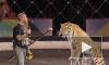 Лучший укротитель Египта обнимался со львами на глазах у детей