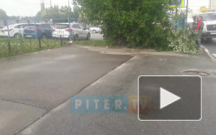 Видео: на Ворошилова из-за сильного ветра на тротуар упало дерево