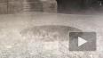 Петербуржцев накрыл ливень из кипятка
