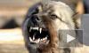 Разорванного собаками шестилетнего мальчика нашли в Брянской области