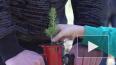 Видео: в Выборгском районе дети и представители власти ...