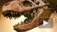 В Японии нашли зубы 10-метрового тираннозавра, жившего ...
