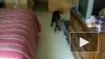 Под кровать и погулять!