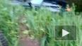 В Токсово BMW X5 влетела в кювет