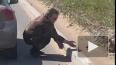 Видео: в Петербурге водитель помог утятам забраться ...