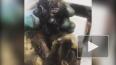 Видео: в Башкирии рабочие вытащили из мазута трех зайчат