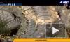 Самый большой в мире крокодил-убийца умер на Филиппинах