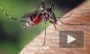 Роспотребнадзор опроверг информацию об опасных комарах на юге России