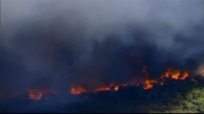 В Австралии сгорело 250 гектаров леса