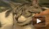 Минсельхоз России предложил маркировать домашних животных