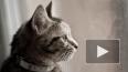 Топ знаменитых котов и кошек Петербурга