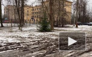 Жители Ржевки недовольны отсутствием тротуаров у единственной школы в микрорайоне