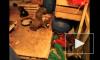 Руководство «Ленспецсму» проверит факт убийства и варки собак на стройке