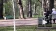 Видео: в Удельном парке пенсионер пытался забить голубей...