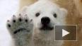 Новорожденный медвежонок из петербургского зоопарка ...