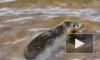 Экологи и тюлени победили застройщиков: в форте Риф будет заповедник, а не стройка
