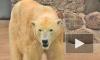 Зооведы, рискуя жизнью, определили пол медвежонка и отметили день рождения косолапой старухи