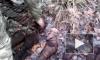 На Петергофском шоссе рабочие нашли фугасный снаряд