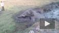 Видео из Индии: Спасенный напуганный слоненок атаковал ...